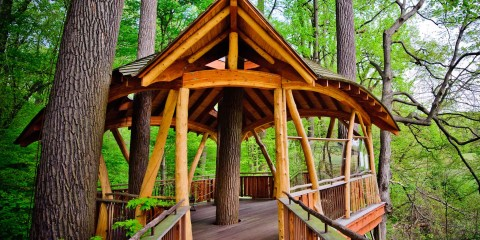 Tree House - Pole structure