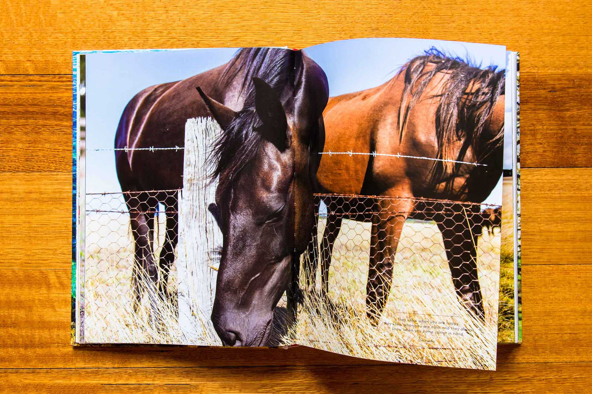 seasons book horses